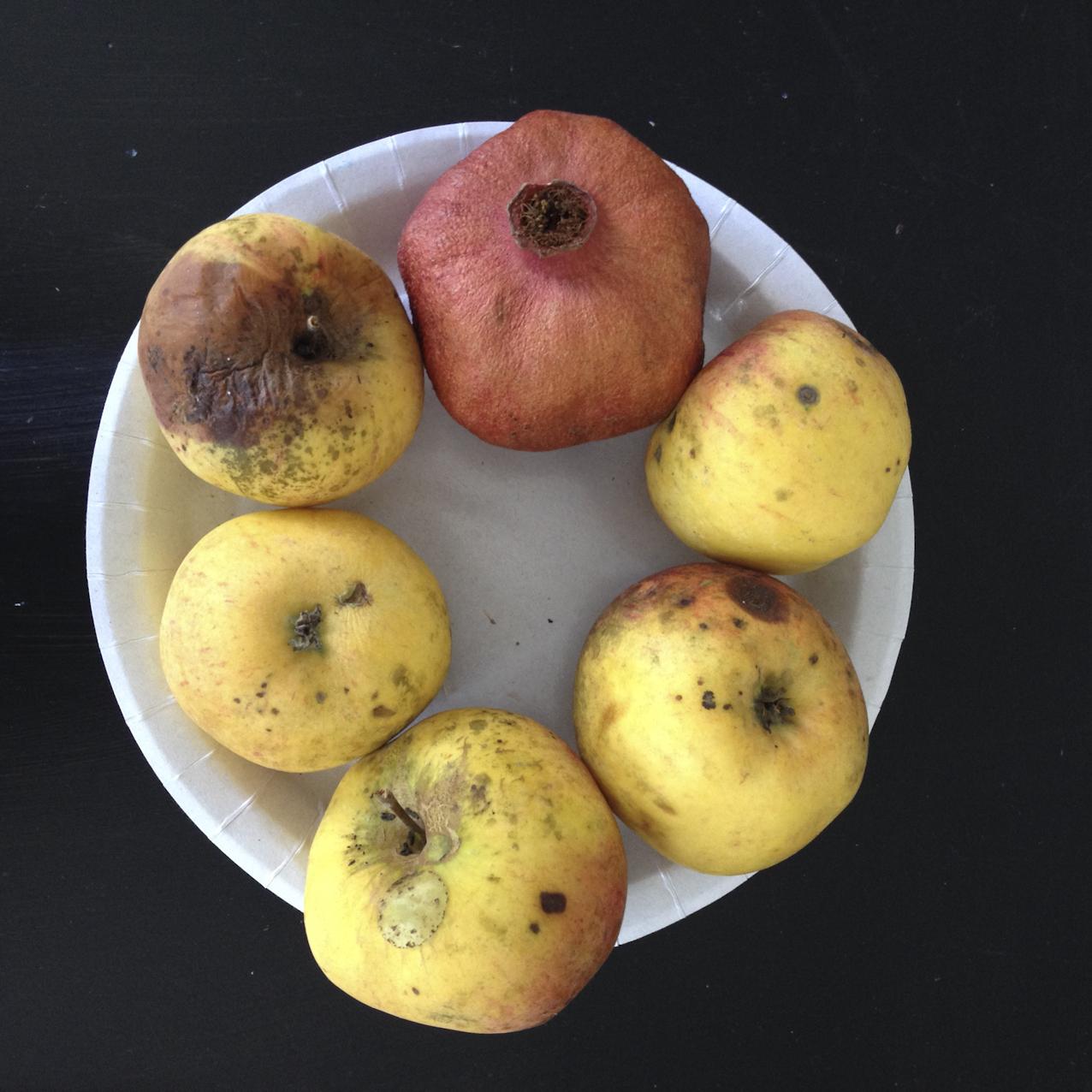 Apfelstillleben in der Druckwerkstatt Hartmann