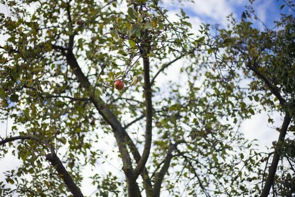 der Schöne am Baum