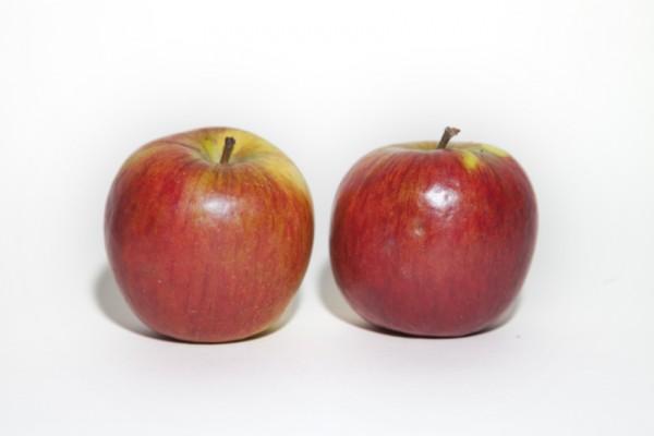 Apfelsorte Havelgold