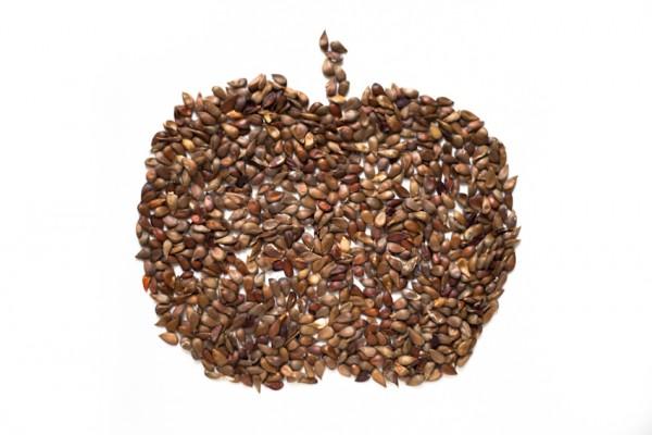 Apfelkernapfel