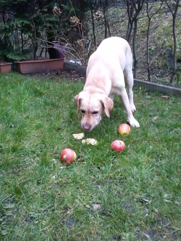 #anappleaday – Bella – die Schöne – mag Äpfel
