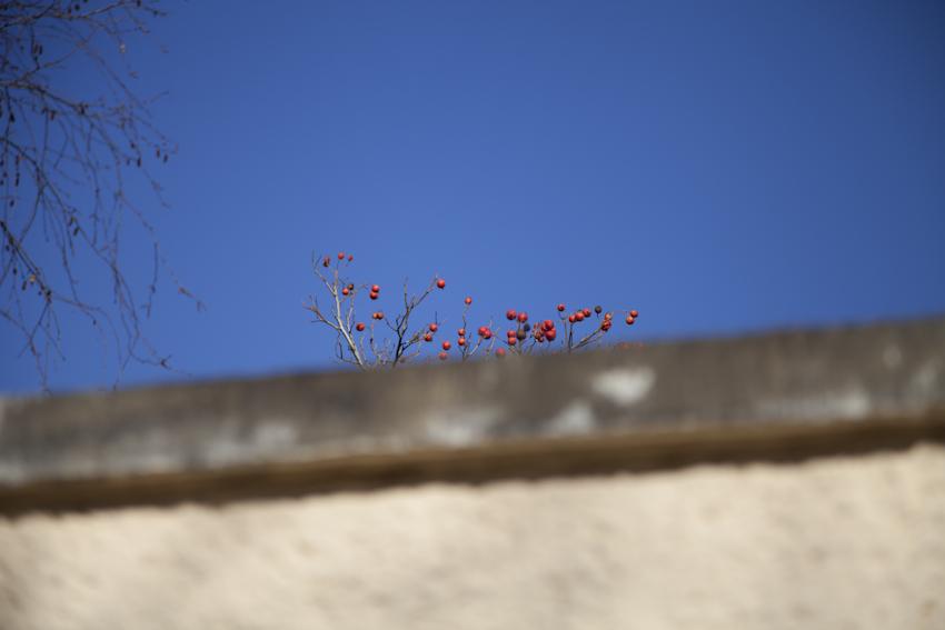 #anappleaday – 02.03.2014 -Wildäpfel oder Hagebutten?