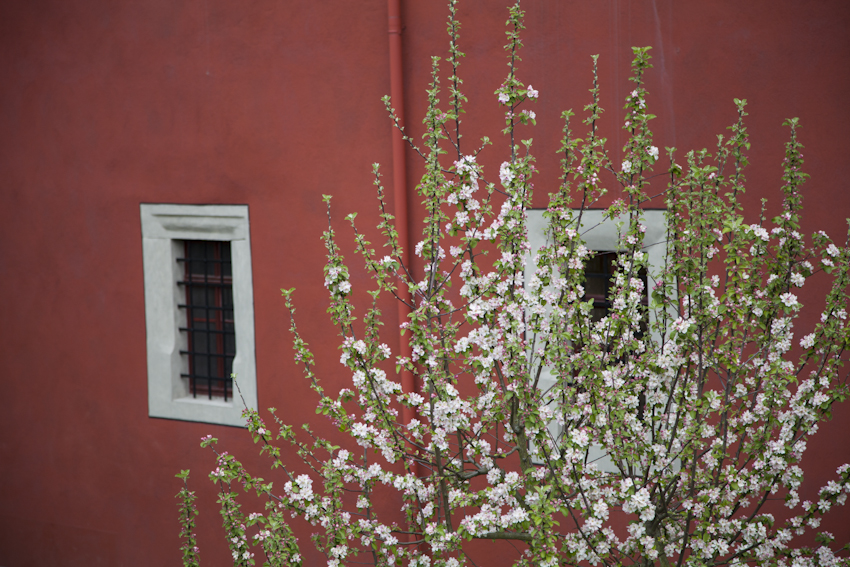 #anappleaday – 20.04.2014 – Osterspaziergang